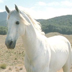 Shadowfax, chief of the Mearas (Demero)