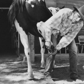 Viggo Mortensen with one of his horses, by Terry Richardson (i-D 2003)